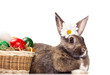 colorful eggs in basket and  bunny