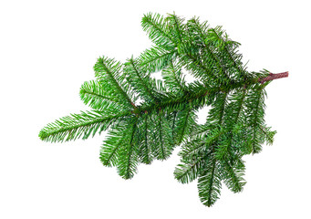 Fir branch on a white background