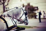 Fototapety Traditional horse-drawn Fiaker carriage in Vienna, Austria