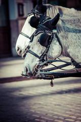 Traditional horse-drawn Fiaker carriage in Vienna, Austria