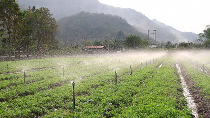 Sprinkler in vegetable field