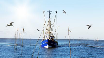 zurück vom Krabbenfang
