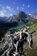 The landscape of Glacier National Park, over Grinnel Lake and the Grinnell Glacier. Mountains and snow. Dead tree trunk and branches.