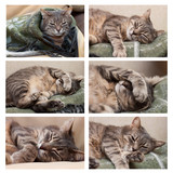 sleeping cat set