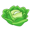 green cabbage cartoon isolated illustration