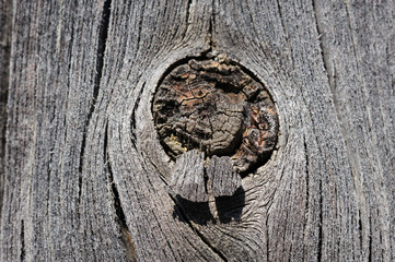 cracked aged wooden board with knot
