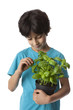 Eight year old boy picking basil leaves