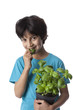 Eight year old boy eats basil leaves