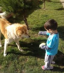 çocuğun köpek dostluğu