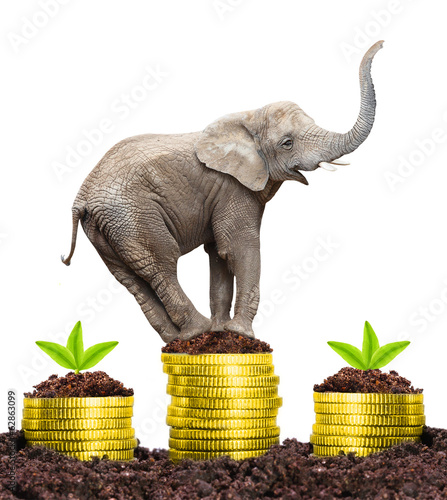 Elephant on a growing pile of a money. Strong investments.