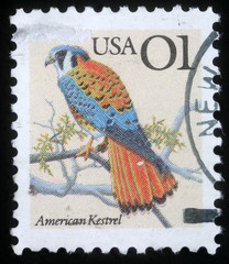 Stamp printed in the USA shows American Kestrel