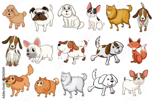 Different breeds of dogs