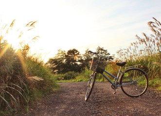 Bicycle and sunlight