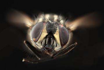 House Fly Cutout