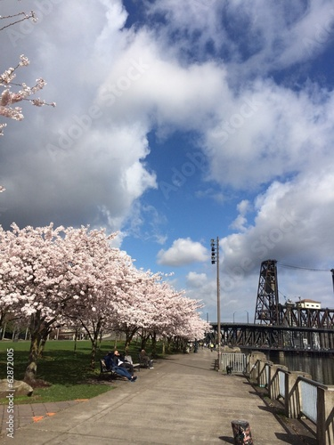 blossoms along the river