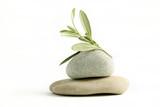Ramo di ulivo fiorito su ciottoli di pietra