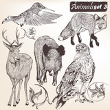 Fototapety Collection of vector hand drawn detailed animals
