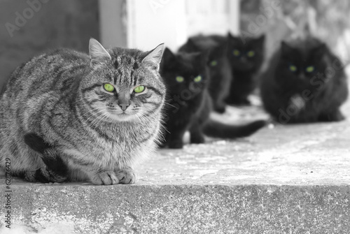 Group of cats