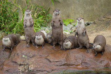 Lovely playful otters in symmetrical stand