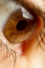 macro fotografia de ojo marron de mujer, pupila, iris y parpado.