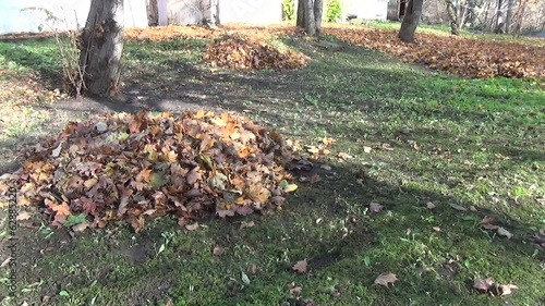 dry leaf pile to the house leaves covered meadow autumn work