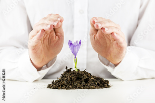Man protecting a spring freesia flower