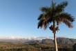 Palmier et mogotesà l'aube