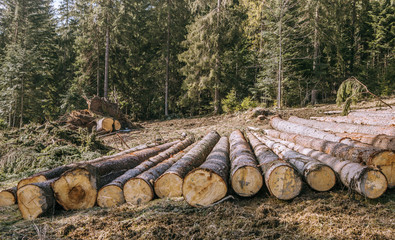 Nature destruction.Logging