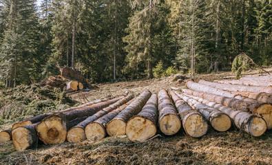 Nature destruction.Logging