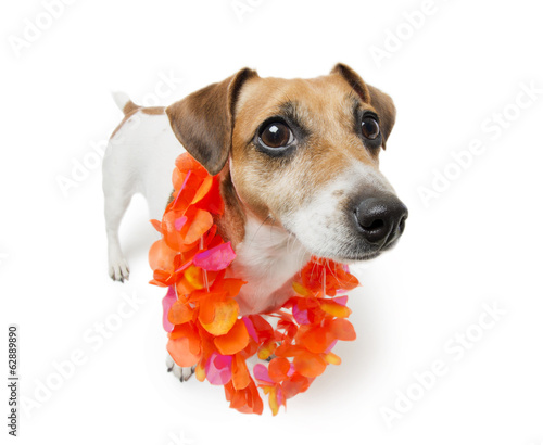 Hawaiian Cute Dog