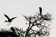 A black or blue heron silhouette in black and white