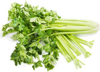 celery ( Apium L. )
