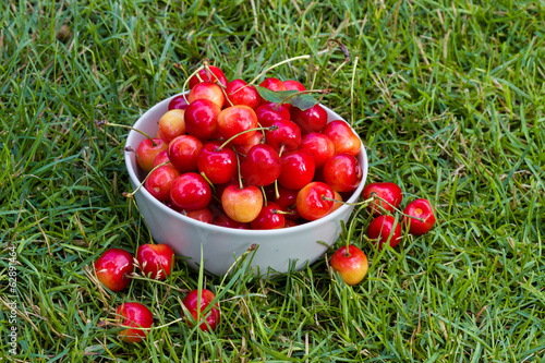 fresh sweet cherry fruits