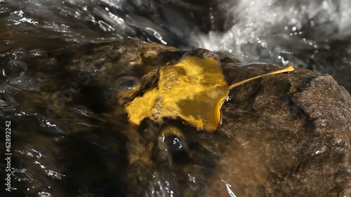 Yellow leaf on rock in flowing small mountain stream
