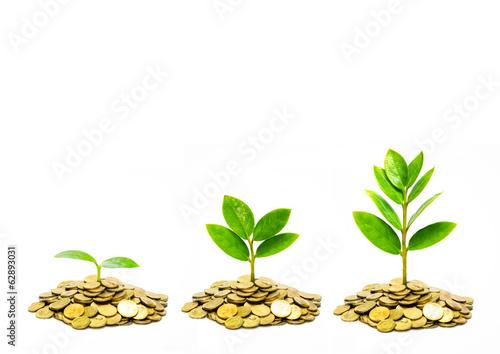 Papiers peints Arbre trees growing on coins / csr / sustainable development