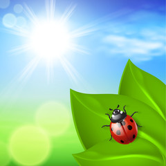 Sunny background with green grass and ladybird