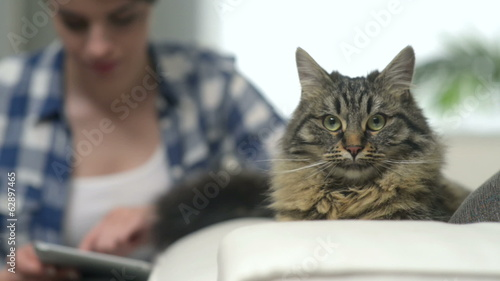 Cat looking at camera with young woman with digital tablet