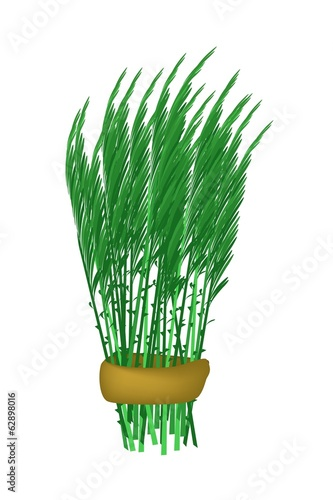 Fresh Green Acacia Pennata Bunch on White Background