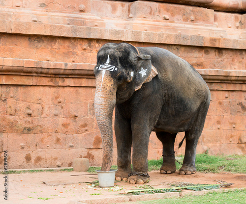 sacred elephant drink from a bucket  in Hindu temple Brihadishwa