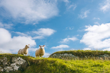 Two sheep in green rocky cliff against blue sky