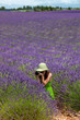 Young woman in lavender field photographing in Provence, France.