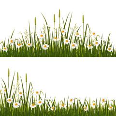 Wild flower meadow, isolated on white background