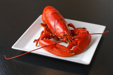 Boiled Atlantic Lobster on white plate