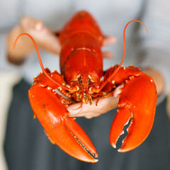 Closeup of woman hands holding cooked lobster