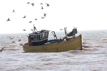 gulls follow incoming fishing boat