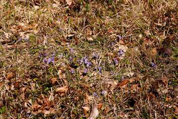 winter wildflowers among dead leaves