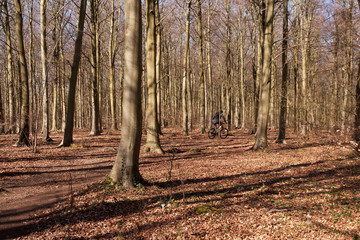 lone cyclist in winter woodland