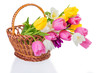 Tulip flowers in a basket