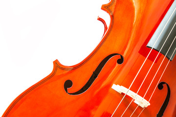 Violin isolate on white background