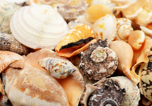 sea shells close-up